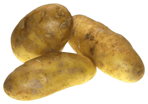 Kartoffeln Sorte Linda